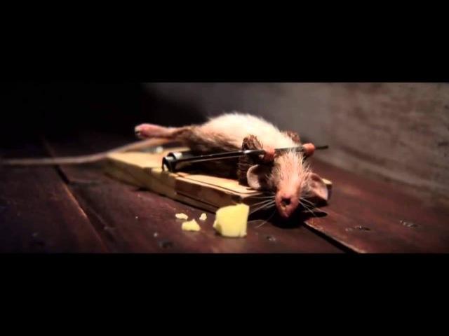 Самая смешная реклама сыра (Мышь качается в мышеловке)