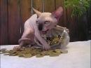 Приколы с животными 5. Ну Очень смешная подборка интересных видео про кошек и собак
