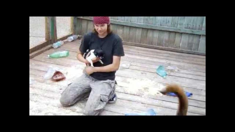 Бельгийская очарка и маленькие собачки. Малинуа, чихуахуа, джек рассел терьер.