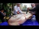 Гигантский Шильбовый Сом Весом 156 кг Пойманный В Реке Меконг Вьетнам