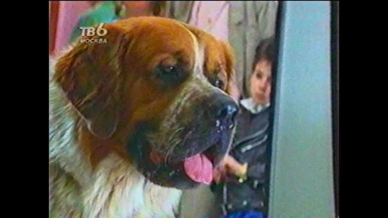 Т/С Дом собаки 1 серия (1990г)
