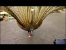 Danse d'un Oiseau.