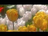 Весна пришла! Оркестр Поля Мориа - Love story - Paul Mauria. Композитор Франсис Лей