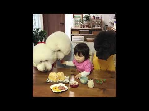 Poodles Share Food With Little Girl