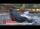 У Північній Кароліні зафільмували як крокодили виживають за мінусової темпера