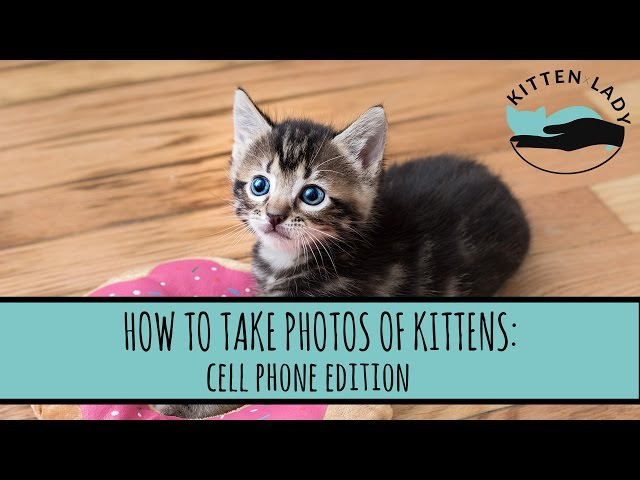 How to Take Photos of Kittens: Cell Phone Edition