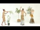 ARTE BI-HEMISFÉRICO - OLEA EUROPAEA II (BIONIC DANCE)