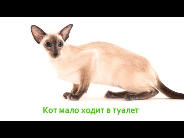 Кот мало ходит в туалет. Ветеринарная клиника Био-Вет.