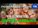 Чем отличается Лагерь Навыка Познавательное ТВ Артём Войтенков