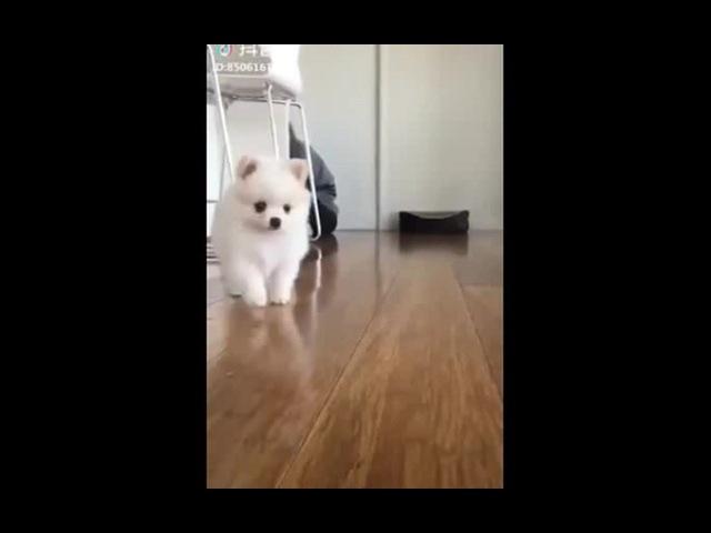 So cute white doggo oh...wait...