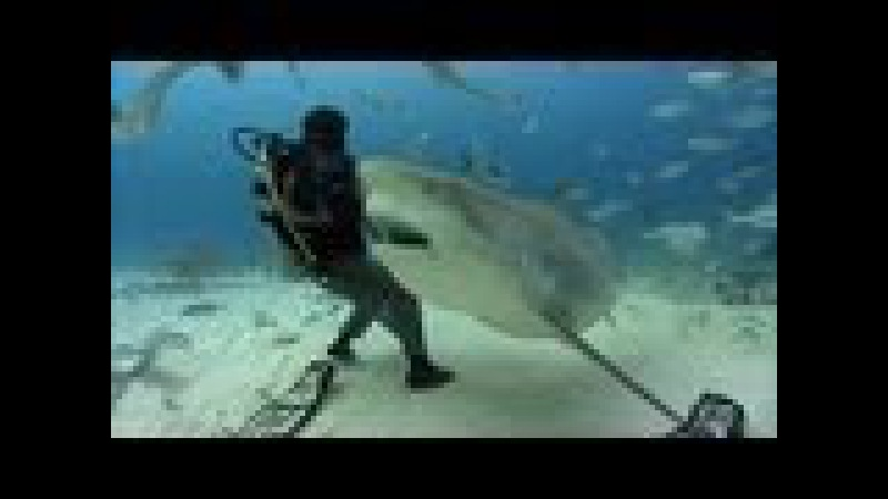 Bull Sharks | JONATHAN BIRD'S BLUE WORLD