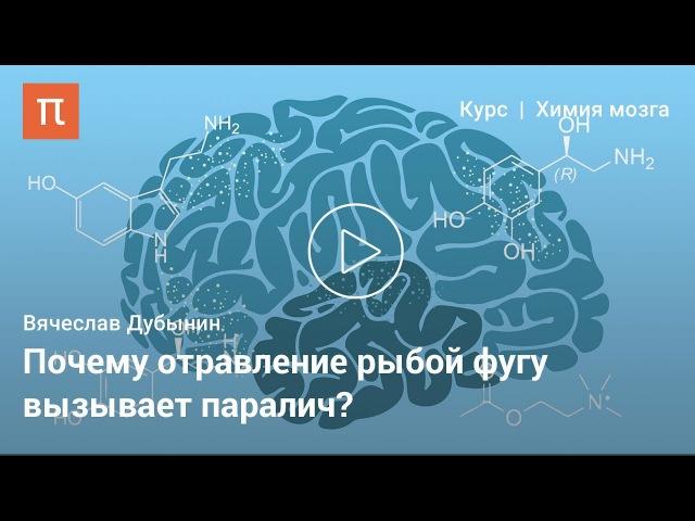 Электрические свойства нейронов —Вячеслав Дубынин 'ktrnhbxtcrbt cdjb̆cndf ytb̆hjyjd —dzxtckfd le,syby