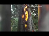 Man finds tree burning from the inside out as he searches for escape routes from California fires