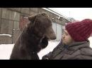 Лапа помощи дрессировщика в инвалидном кресле возит по Москве медведь