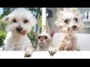 Смешные собаки Смешные коты – Большая ТОПовая подборка смешного видео про котов и собак 2018