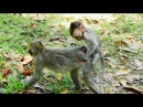 Ah..! What Little Baby Monkey Micah Doing On Amber? Why Baby Monkey Can Do This With Sister Amber?