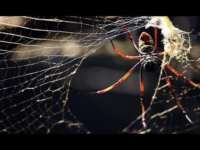 Квест (паутина, Звонок, время, зомби, фокус с резинками, Man, Стивен Хоккинг) - лагер ...