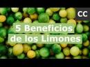 5 Beneficios de los Limones   Ciencia de la Comida
