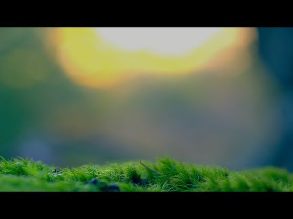 Magic Surfer Meadows Silk Music