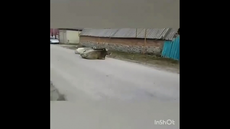 Дагестанский паркур