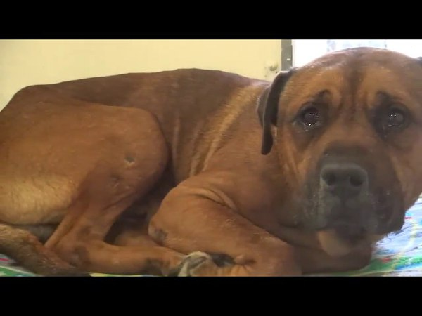 Dog can't stop crying after realizing he's been abandoned at the animal shelter!