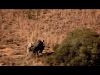 Eyes Open-2. Wildlife hero (2.1)