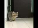 Happy Cats - Cutest video youll watch today! ❤️(640p)