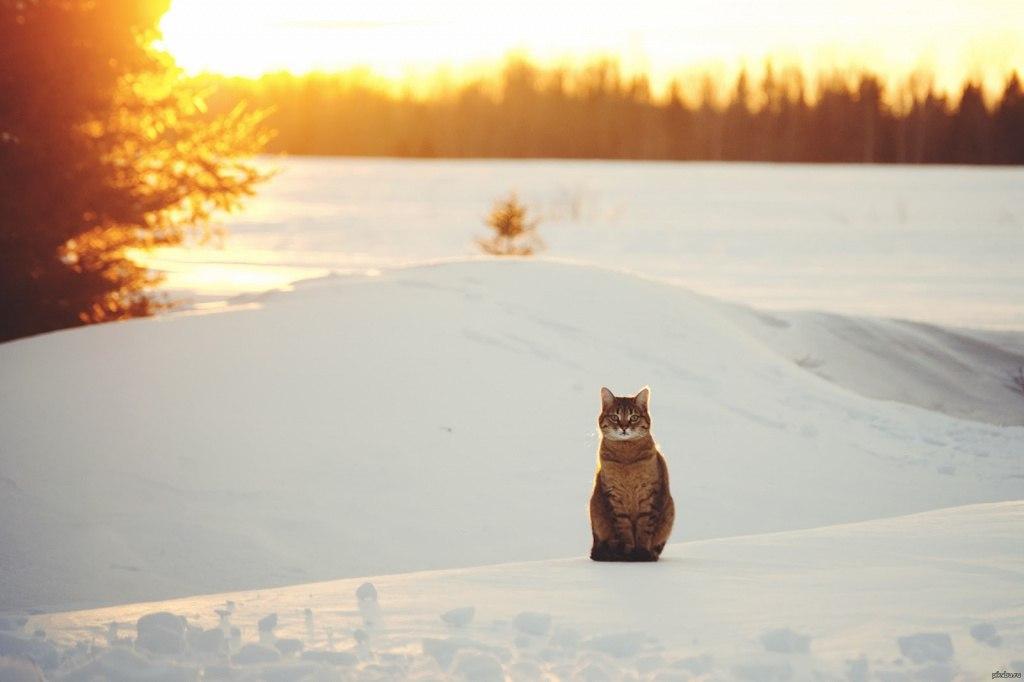 Утро мудренее ночи, поэтому желаю вам набираться мудрости и встретить рассвет в отличном настроении!