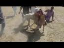 Бой Булли Кутт Пакистан