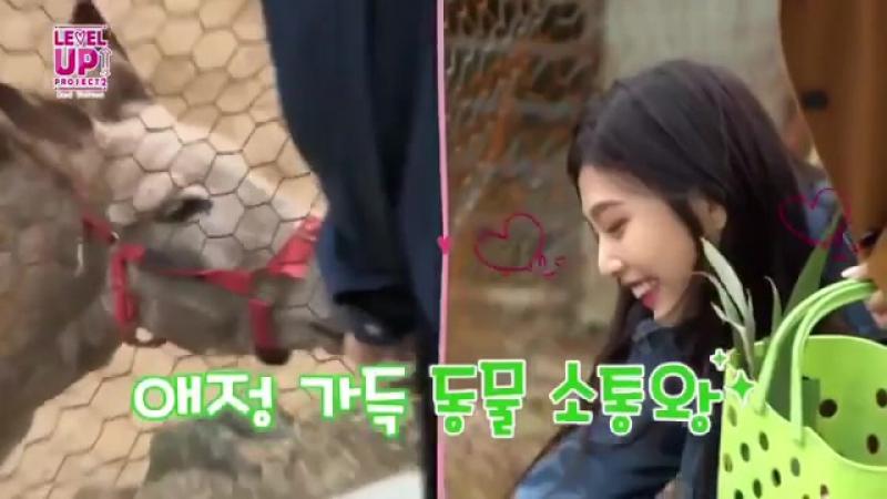 Red Velvet 레드벨벳 Level Up Project 2 season - Joy loves animals / Джой любит животных