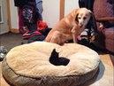 ПОПРОБУЙ НЕ ЗАСМЕЯТЬСЯ Смешные Приколы и фейлы с Животными до слез смешные коты 77