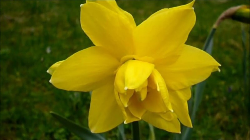По планете шагает Весна - природа торжествует Великолепием своим