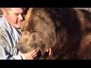НЕОБЫЧНАЯ ДРУЖБА ЧЕЛОВЕКА И Медведя Гризли Wrestling A Grizzly Bear In My Garden