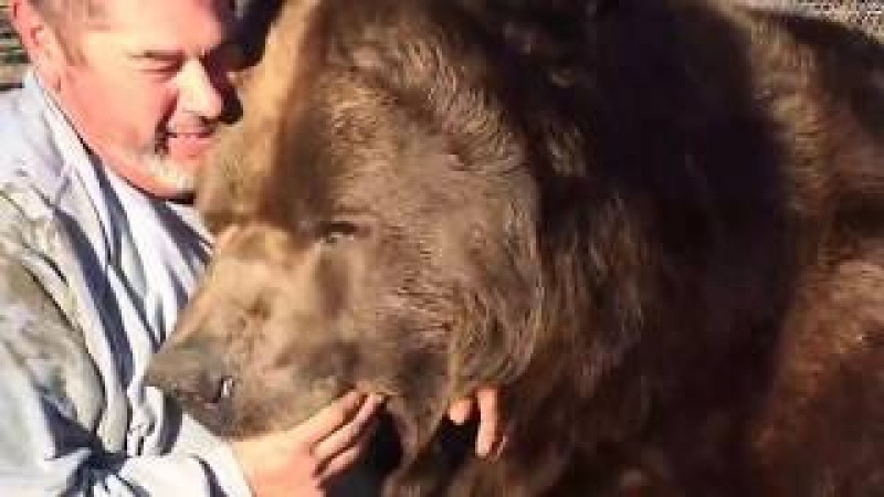 НЕОБЫЧНАЯ ДРУЖБА ЧЕЛОВЕКА И Медведя Гризли!Wrestling A Grizzly Bear In My Garden