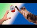 ЧЕЛЛЕНДЖ Фани Ари пытается съесть киндер сюрпризы раньше кота
