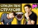 Топ-3 песен про страусов Мегатоп 5