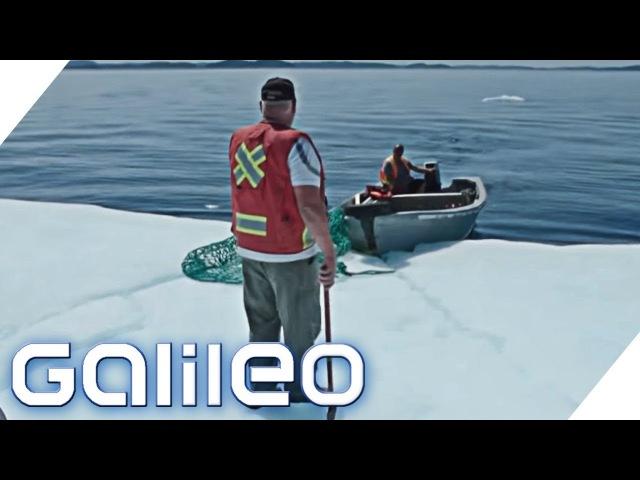 Der Eisberg-Jäger aus Kanada | Galileo | ProSieben