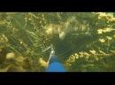 Подводная охота на Балхаше. Змееголов, сазан, жерех, амур, карась, КРАСОТИЩЕЕЕ...