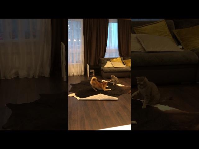 Кто в доме хозяин. Кот катается на собаке. Прикол