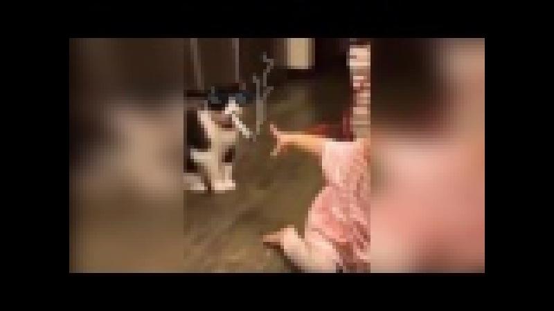 The most insidious cat Самый коварный кот