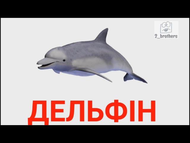 Картки Домана Українською ТВАРИНИ