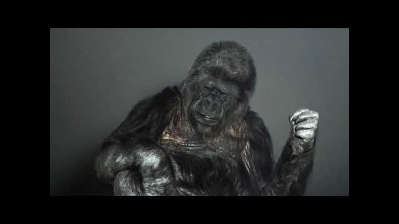 Горилла Коко обращается ко всем людям нашей планеты.
