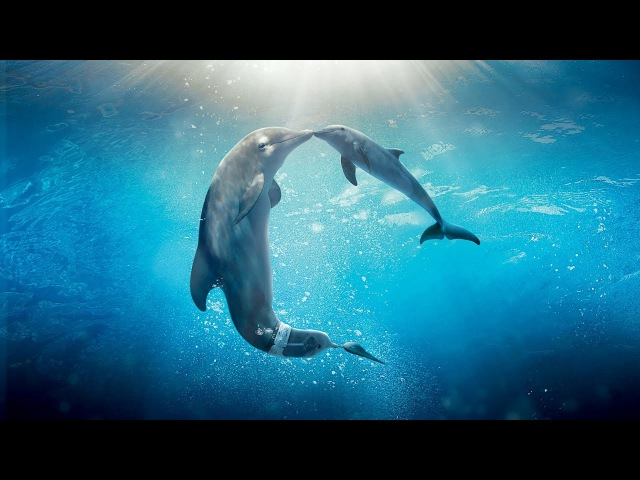 Healing songs of Dolphins Whales   Deep Meditative Music for Harmony of Inner Peace