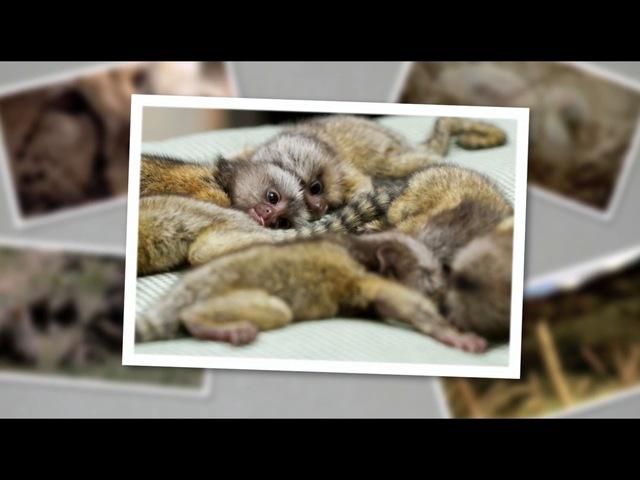 Детеныши в дикой природе 9 серия. Детеныши джунглей - утро / Baby animals in the wild (2015)