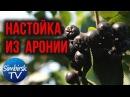 Как сделать настойку из черноплодной рябины SimbirskTV