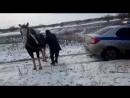 Конь ауешник отказывается помогать полиции