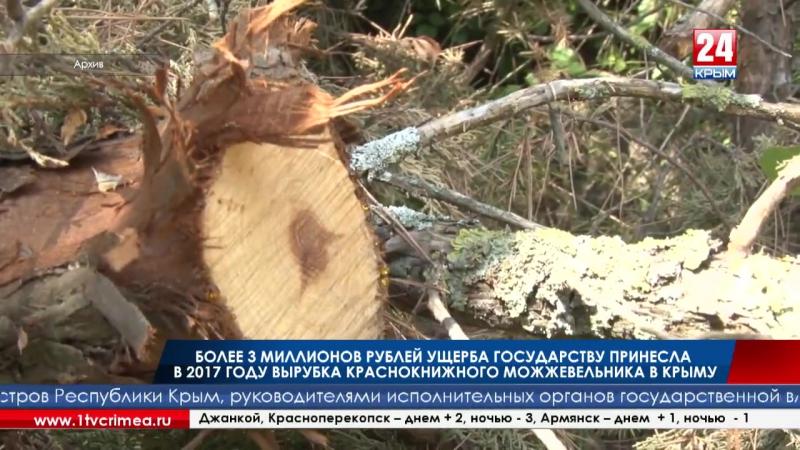 Более 3 миллионов рублей ущерба государству принесла в 2017 году вырубка краснокнижного можжевельника в Крыму За это время инспе