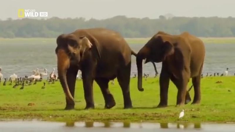 Шри Ланка Таинственный остров National Geographic