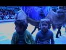 цирк на фонтанке. программа братьев из германии криек.