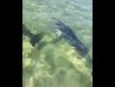 Дельфины в Витязево.